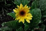 flora and fauna 015.1