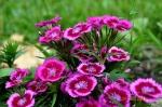 flora and fauna 017.1