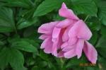 flora and fauna 019