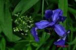 flora and fauna 020.1