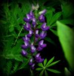 flora and fauna 023.1