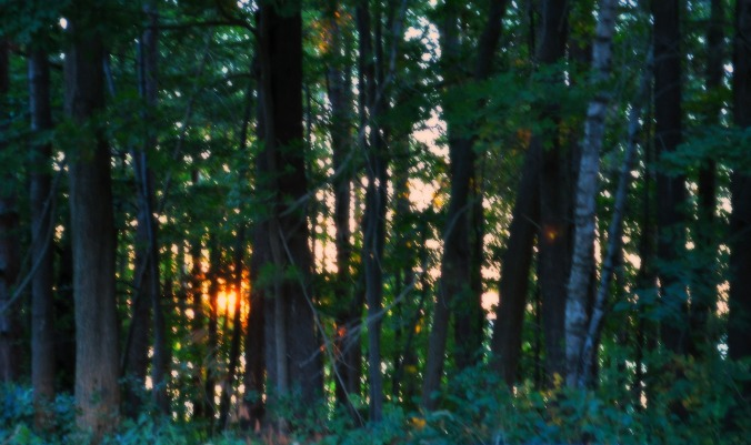 saturday-afternoon-setting-glow.jpg