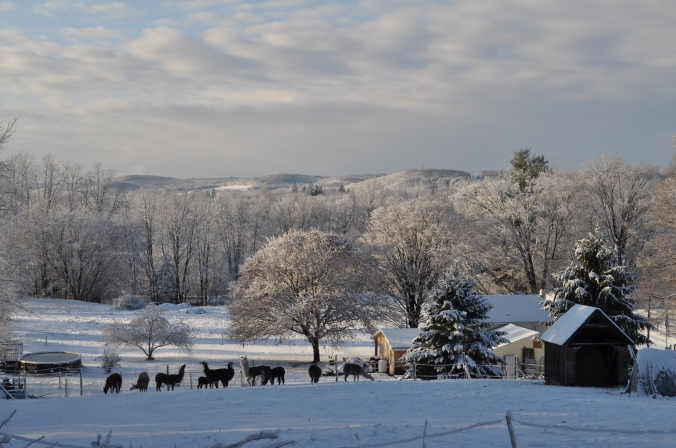 snowy morning in December 024