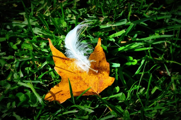 fall-and-feather.jpg