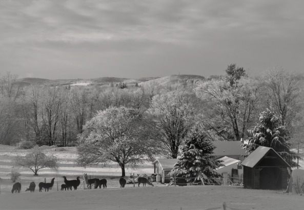 snowy-morning-in-december-81.jpg