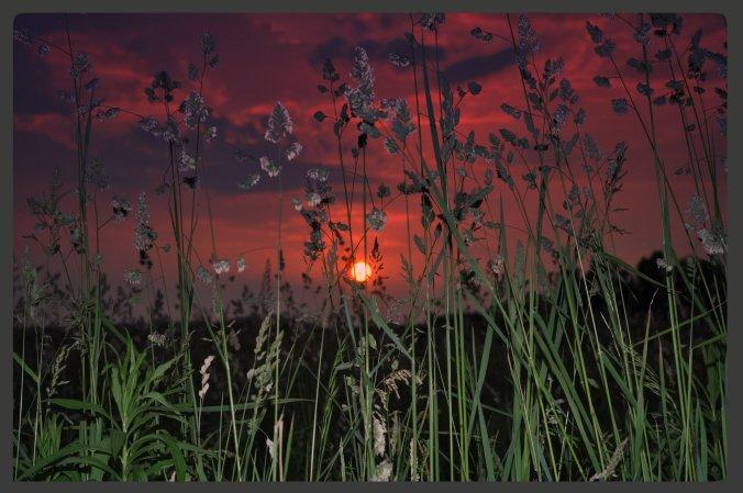 sort through the weeds