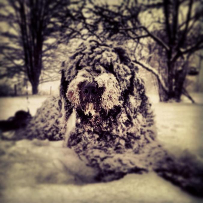 Fiini in the snow