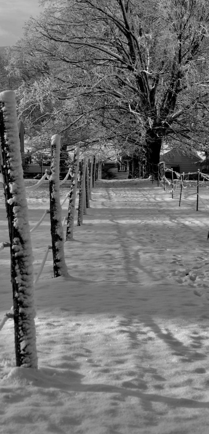 snowy morning in December 9
