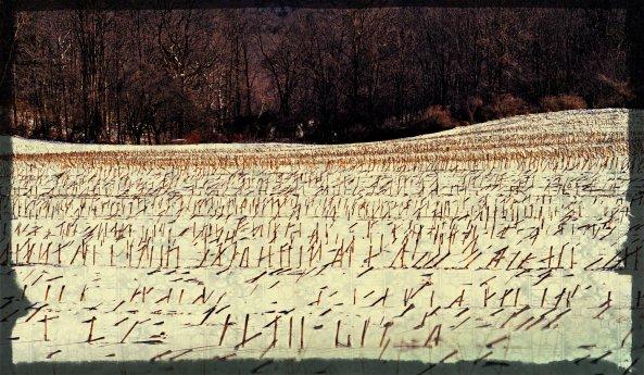 2013 snow cornfield